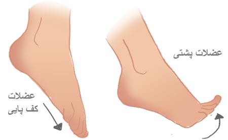 خمیدگی کف پا